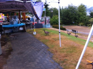 First visitors to our booth: a flock of geese!